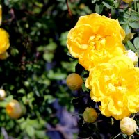 Дарите желтые цветы!  Не слушайте запрета! :: Валентина ツ ღ✿ღ