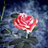Дикая роза :: Виктория Бессонова