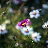 Цветы в парке :: Олег Чернышев