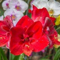 орхидеи :: Дмитрий Лупандин