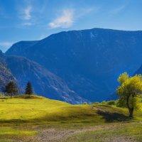 Алтайская весна :: Владимир Колесников