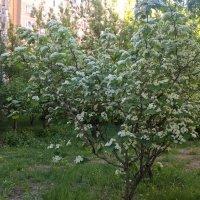 Когда цвели сады :: Елена Семигина