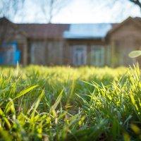 Трава у дома :: Валерий Зонов