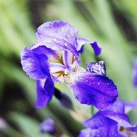 весна :: Alexandr