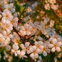 Нежное дыхание весны :: Нина северянка