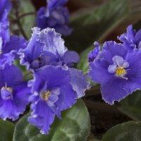 Цветы на подоконнике :: Олег Кистенёв