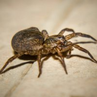 IMG_2402 паук :: Олег Петрушин