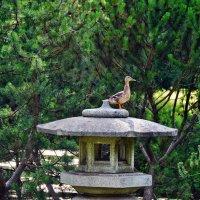 в Ботаническом саду... Японский сад :: Татьяна Котова