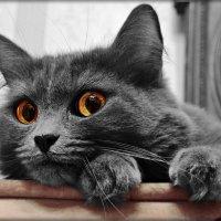 если бы каждый был начеку, не одна б мышь не вылезла из норки :: Natalia Mihailova