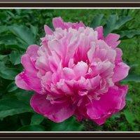 Цветок :: Владимир Бровко