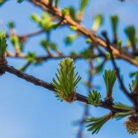 Весна пришла на Север :: Борис Швец