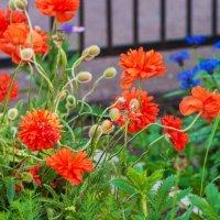 Яркие краски мая :: Любовь Потеряхина