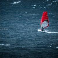 наперегонки с ветром :: Sergey Bagach
