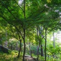 Namsan Park II :: Илья Меркулов