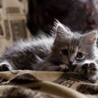 Уставший котенок :: samplephoto _