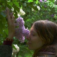 Есть в сирени дивный аромат, придающий силы, радость людям! :: Galina Leskova