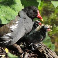 Птичье семейство :: Мария Кондрашова
