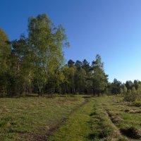 Тропинка в лес :: Анатолий Иргл
