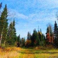 Осенняя палитра :: Ильдар Шангараев