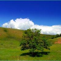 Одинокий дуб :: Андрей Заломленков