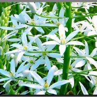цветы  в  поле. :: Ivana
