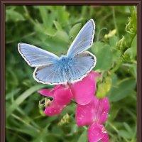 Бабочка :: Владимир Бровко