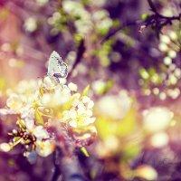 весна .... :: Светлана