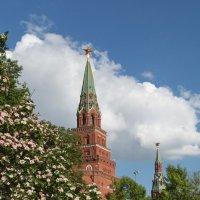 Кремлевские башни :: Светлана
