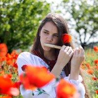 Маковая песня :: Olga Volkova