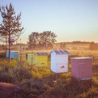 Пока пчёлы спят :: Сергей Смирнов