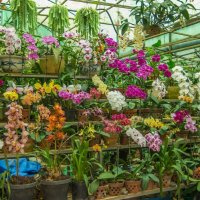 орхидея :: Дмитрий Лупандин