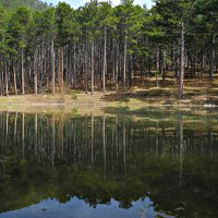 Грушовое озеро :: Елизавета Царук