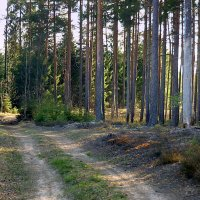 Лесными дорогами :: Павлова Татьяна Павлова