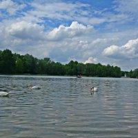 Лебединое озеро.... :: Galina Dzubina