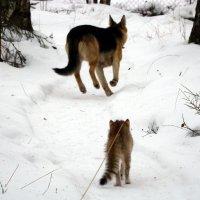 самый страшный зверь :: Елена Якушина