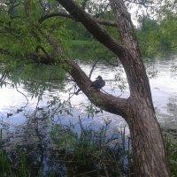 Утка на дереве :: Сапсан