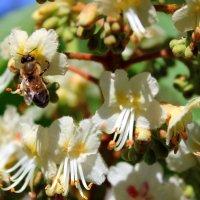 Только тех, кто любит труд,  люди «пчёлками» зовут. ) :: Валентина ツ ღ✿ღ