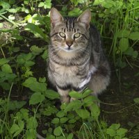 Майский котик :: Aнна Зарубина