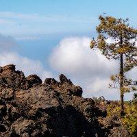 Облака под нами.Граница Леса и остатков лавы после извержения :: Witalij Loewin