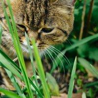 Муся и зелёная трава :: Света Кондрашова