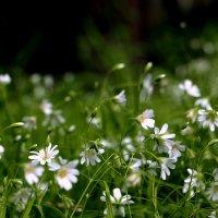 Цветы у дома моего... :: veilins veilins