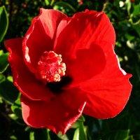 Цветок :: Асылбек Айманов