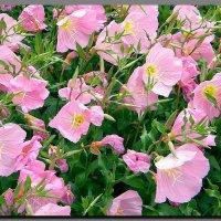 в  розовом   цвете. :: Ivana