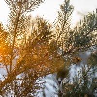 Зимний закат :: andrey
