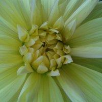 цветок :: кристина гордеева