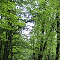 Изумрудный лес :: valeriy khlopunov