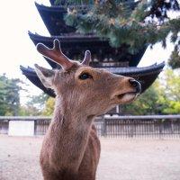 Deer :: Мария Стоянова Тимбукту