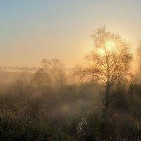 Утро :: Мария Кривошеина