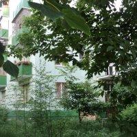 Совсем зелёненький тихий дворик. :: Ольга Кривых