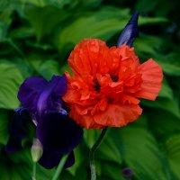 Вальс цветов :: Ирина Falcone